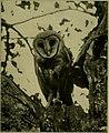 Bird lore (1905) (14726656576).jpg