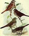 Bird lore (1913) (14768868043).jpg