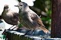 Birds..Birds..Birds.. (5930554475).jpg