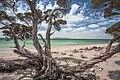 Black Springs, Coffin Bay National Park - South Australia.jpg