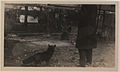 Black foxes owned by Spring Park Black Fox Company, Limited Photo C (HS85-10-26276).jpg