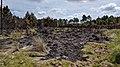Blackened grass (6bbd5109-ce9b-453c-a500-9f873ca9e9d9).jpg
