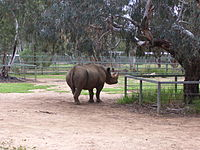 Blackrhino wpz 06.jpg