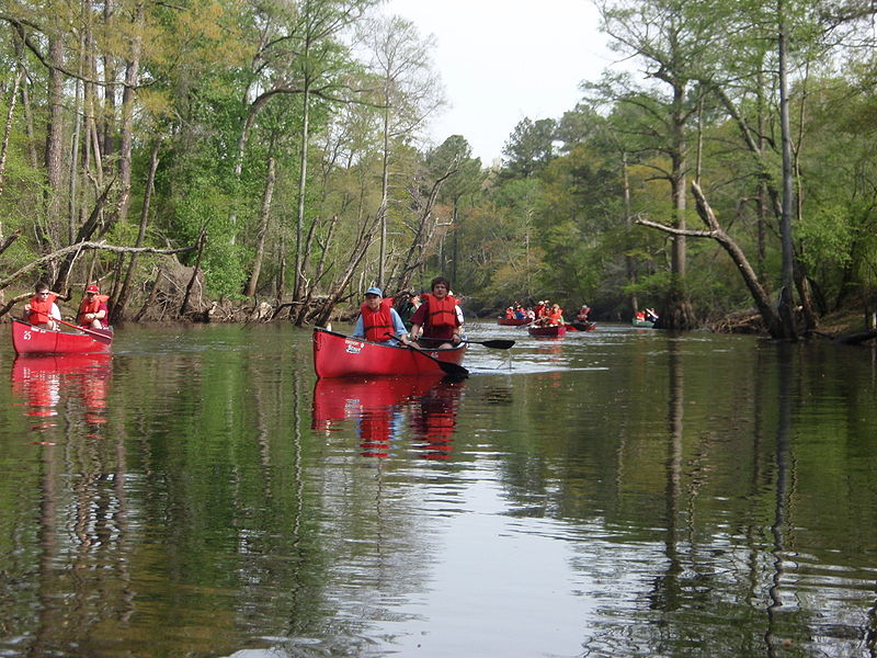Boy Scouts paddling canoes on the Blackwater River, Virginia