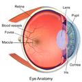 Blausen 0389 EyeAnatomy 02.png