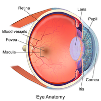 Глаз[1]