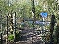Bluebells in Woodland - geograph.org.uk - 406352.jpg