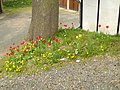 Blumen zum Osternfest (2011) - panoramio.jpg