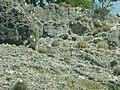Bonaire 053 (2084480957).jpg