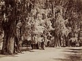 Bosque de Chapultepec - Rumbo de Mexico (6950784544).jpg