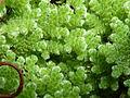 BotanicGardensPisa (44).JPG