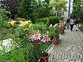 Botanická zahrada Tábor - lilie.jpg
