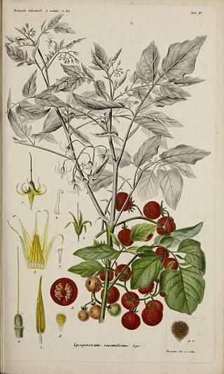 Botanisk tidsskrift (17645191178).jpg