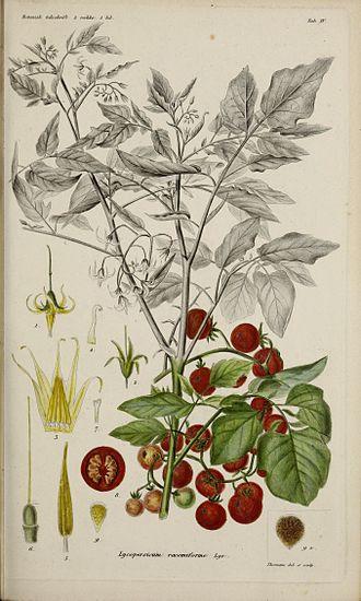 Solanum pimpinellifolium - Image: Botanisk tidsskrift (17645191178)
