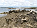 Boulders on the shore - geograph.org.uk - 1442651.jpg