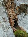 Brèche osseuse quaternaire de Ville-di-Pietrabugno (Haute-Corse, France).JPG