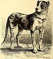 Brehms Tierleben - allgemeine Kunde des Tierreichs - mit 1800 Abbildungen im Text, 9 Karten und 180 Tafeln in Farbendruck und Holzschnitt (1890) (19791770284).jpg