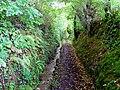 Bridleway near Ty-gwyn, Lampeter Velfrey - geograph.org.uk - 960141.jpg