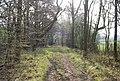 Bridleway north of Bigknowle - geograph.org.uk - 1246291.jpg