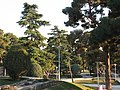 Bright Sunshine in Saiee Park, Tehran, Iran - panoramio - Behrooz Rezvani.jpg