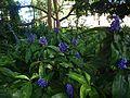 Brisbane City Botanic Gardens (09).jpg