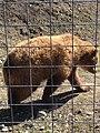 British Columbia Wildlife Park 1.JPG