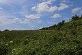 Brochterbeck Naturschutzgebiet Osterklee 18.JPG