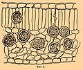 Brockhaus and Efron Encyclopedic Dictionary b45 352-0.jpg