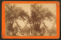 Brougham Street, Savannah, Ga, by Ryan, D. J., 1837-.png