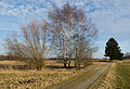 Burgweiler-1051.jpg