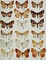 Butterflies and moths of Newfoundland and Labrador - the macrolepidoptera (1980) (20323058570).jpg