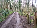 Byway in Brimstone Wood - geograph.org.uk - 1227283.jpg