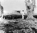 COLLECTIE TROPENMUSEUM De lavastroom die bij de uitbarsting van de vulkaan Keloed in 1919 vrijkwam heeft stenen achtergelaten in een Ficus Elastica bij Kali Postih Oost-Java TMnr 10004323.jpg