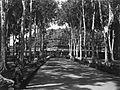 COLLECTIE TROPENMUSEUM Weg met bomen bij de Borobudur TMnr 60025456.jpg