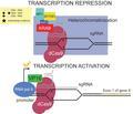 CRISPR effectors.pdf