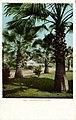 California - Fan Palms (NBY 432028).jpg
