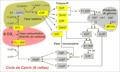 Calvin cycle diagram miguelferig.png