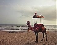 Camel Ride at Madhavpur Beach l Gujarat