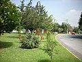 Camellón con flores - panoramio.jpg