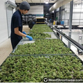 Cannabis industry.png