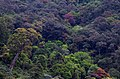 Canopy of tropical rain forest in Anaimalai hills DSC 2208 b.jpg