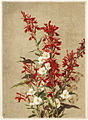 Cardinal Flowers (Boston Public Library).jpg