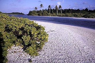 Caroline Island - The many islets of Caroline Island are separated by shallow channels. In the foreground: coral rubble beach and Tournefortia shrub on Long Islet. In the background: Pisonia forest and a row of non-indigenous coconut palms on Nake Islet.