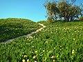Carpinteria - panoramio (6).jpg
