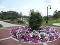 Cascades Park (Tallahassee), Petunias, Lafayette entrance.JPG