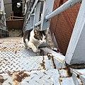 Cat (45803780672).jpg