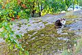 Cat Outside in Sweden-148886.jpg
