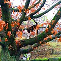 Cats and an oak tree, Calderdale District, UK - panoramio.jpg