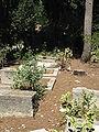 Cemetery of Kibutz Yagur IMG 2927.JPG