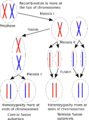 Central fusion and terminal fusion automixis.png